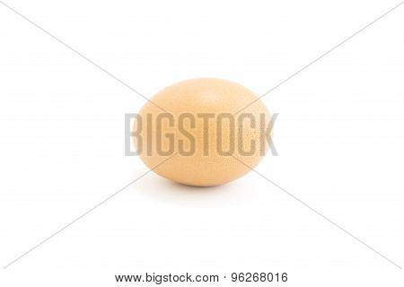 Fresh Egg From Organic Farm