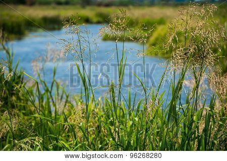Wild Grass Meadow And River On Background