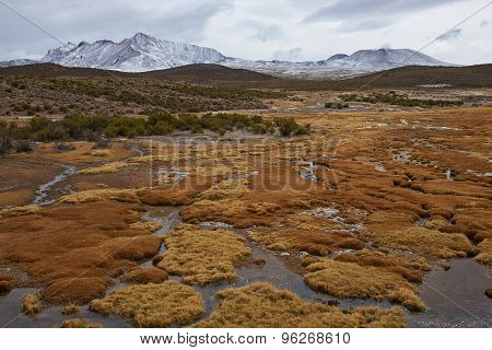 Wetland on the Altiplano