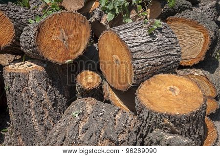 Large Portions Of A Tree Cut Down