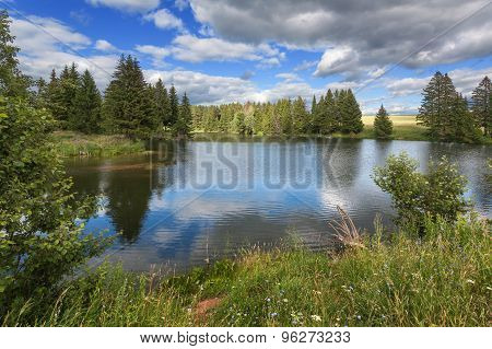 Forest lake with grass and flowers on the banks