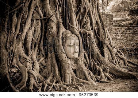 Buddha Head In Tree