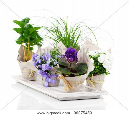 Spring Flowers And Plants, Isolated On White Background