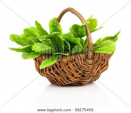 Bundle Of Fresh Sage In A Wicker Basket, On A White Background