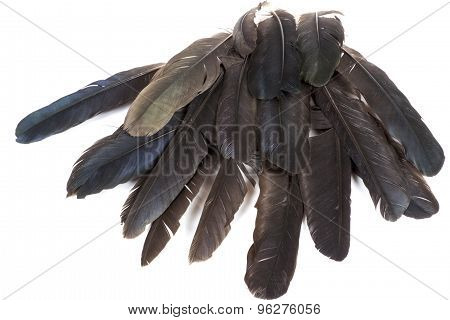 Collection Of Birds' Feathers In Shades Of Grey