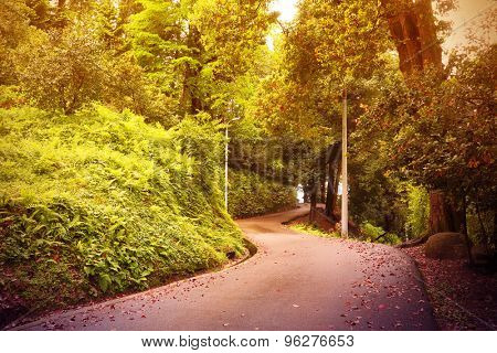 Road Through The Green mixed forest