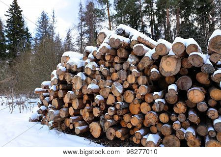 Harvesting Timber Logs In A Forest