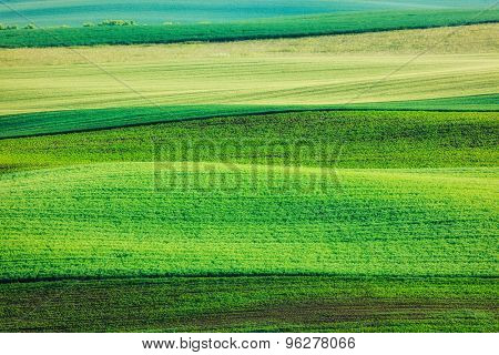 Abstract pattern of rolling fields in summer. Moravia, Czech Republic