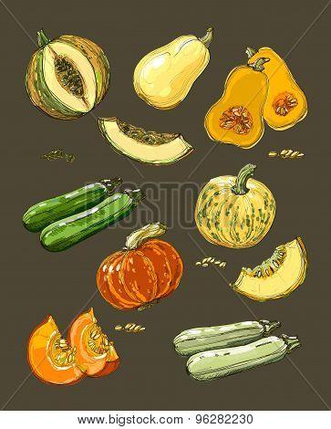 Hand drawn illustration of pumpkin.