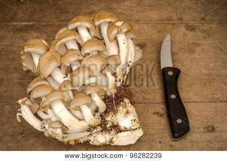 Group Of King Oyster Mushroom Pleurotus On The Wooden Background