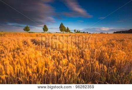 Long Exposure Landscape Of Corn Field