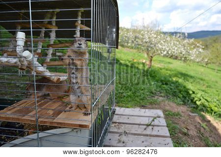 Horizontal Picture Of Prairie Dog Locked In A Cage