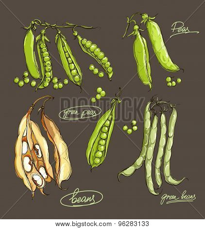 vector hand drawing  legumes on a dark background