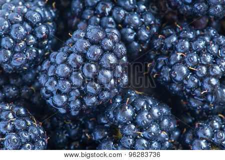 Blackberries with water drops close up