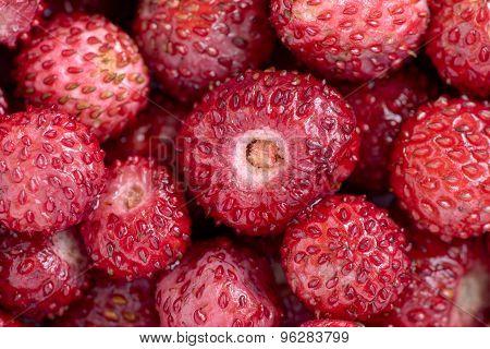 Wild strawberry close up
