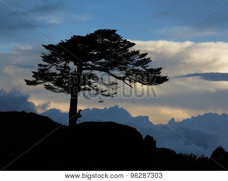 Wind Blown Tree And Dramatic Sky