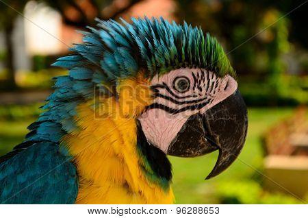macaw side