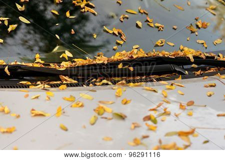 Car's windshield with autumnal leaves