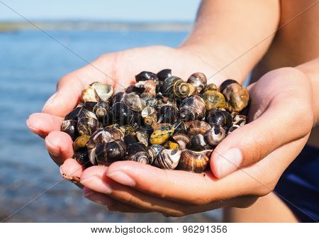 Young Female Person With Hands Full Of Salt Water Snails On The Beach