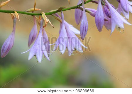 Close up shot of purple bell flowers