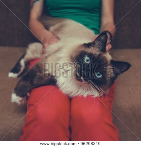 Woman Holding A Siamese Cat