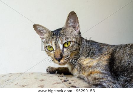 Young Mother Cat