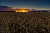 stock photo of grown up  - Sunset over cereal field with grown up ears - JPG