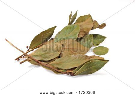 Dry Branch Of A Laurel Tree