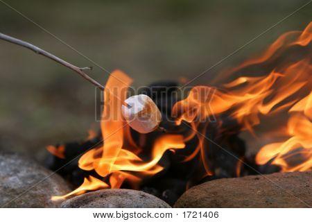 Marshmallow Feast
