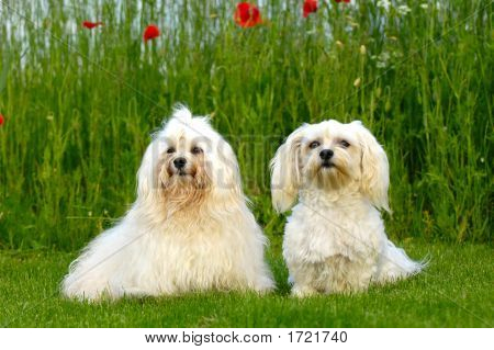 Two Dogs In The Natur