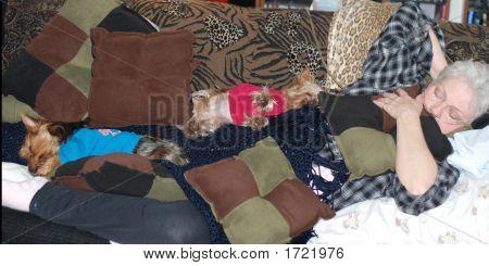 Dsc_0159Cherrye And Dogs Asleepgtg607 Copy