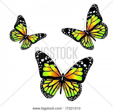 Three butterflies of green color on a white background