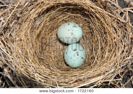 Bird Nest And Blue Eggs