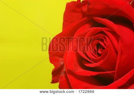 Rose-On-Green