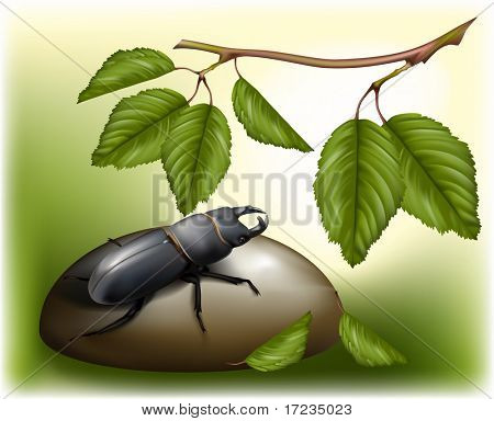 beetle in nature friendly environment