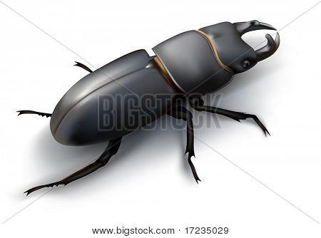 Black beatle. stag-beetle (Lucanus cervus)