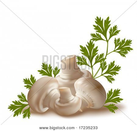Vector. Ripe mushroom champignon fruits with parsley leaves.
