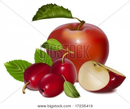 Vector illustration. Apples and plums.