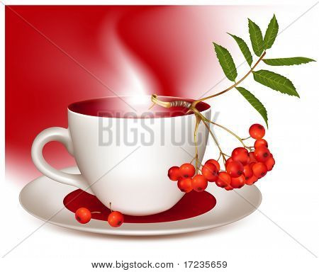 Vector illustration. Cup of tea and ripe ashberry.