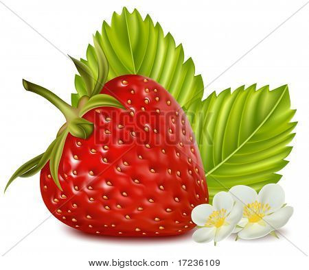 Photorealistic vector illustration. Strawberry with leaves and flowers.