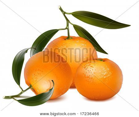 Photo-realistic vector. Fresh tangerine fruits with green leaves.