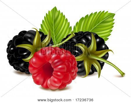 Vector illustration of ripe raspberry and blackberries (dewberry) with green leaves.