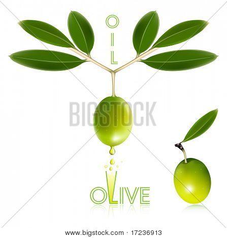 Ilustração em vetor foto-realistas. Azeitonas verdes com folhas.
