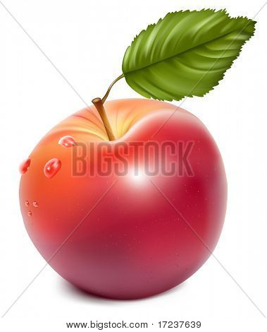 Vector. Ripe red apple with water drops.