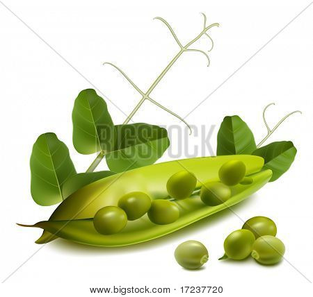 Vector green ripe peas with leaves.
