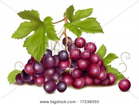 Vector. Grape cluster with green leaves.