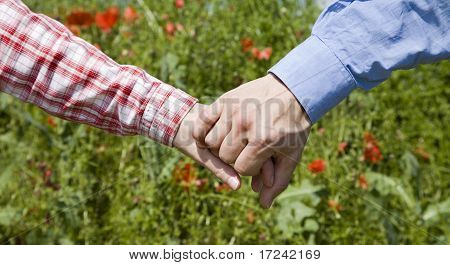 hands of the pair on the summer meadow