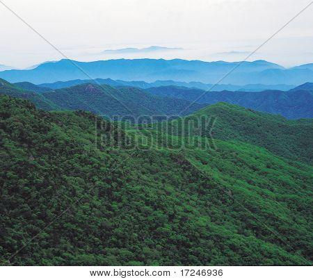 Scenie View