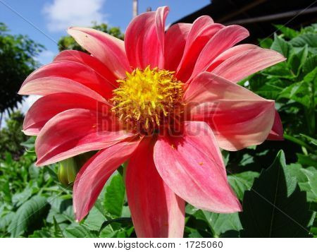 Flower, Flor