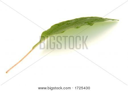 Leaf Green Water 02
